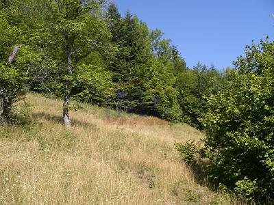 Predám pozemok neďaleko jazera Klinger v Banskej Štiavnici